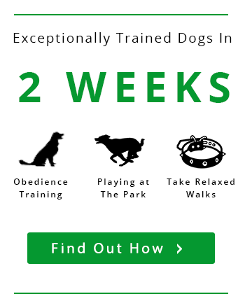dog trainer bradenton