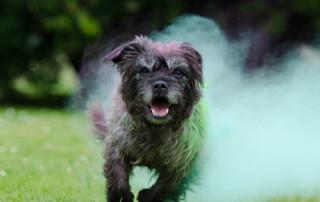 puppy trainer tampa