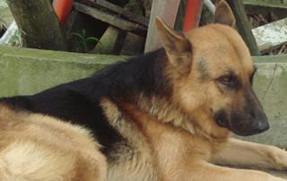 sarasota dog training professional