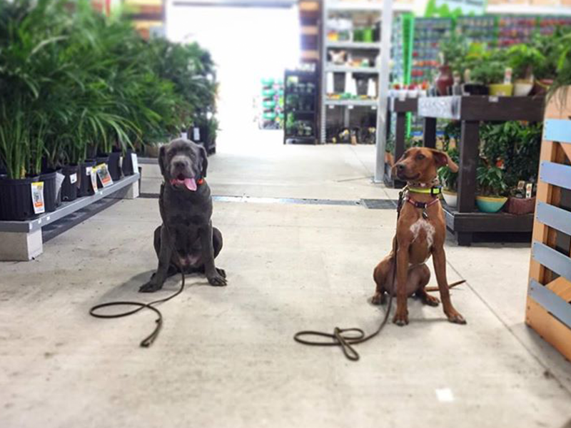 dog trainers Sarasota