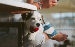 dog training sarasota