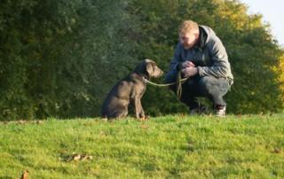 bradenton dog trainers