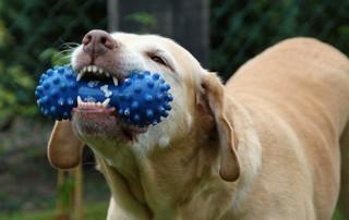 dog training srq